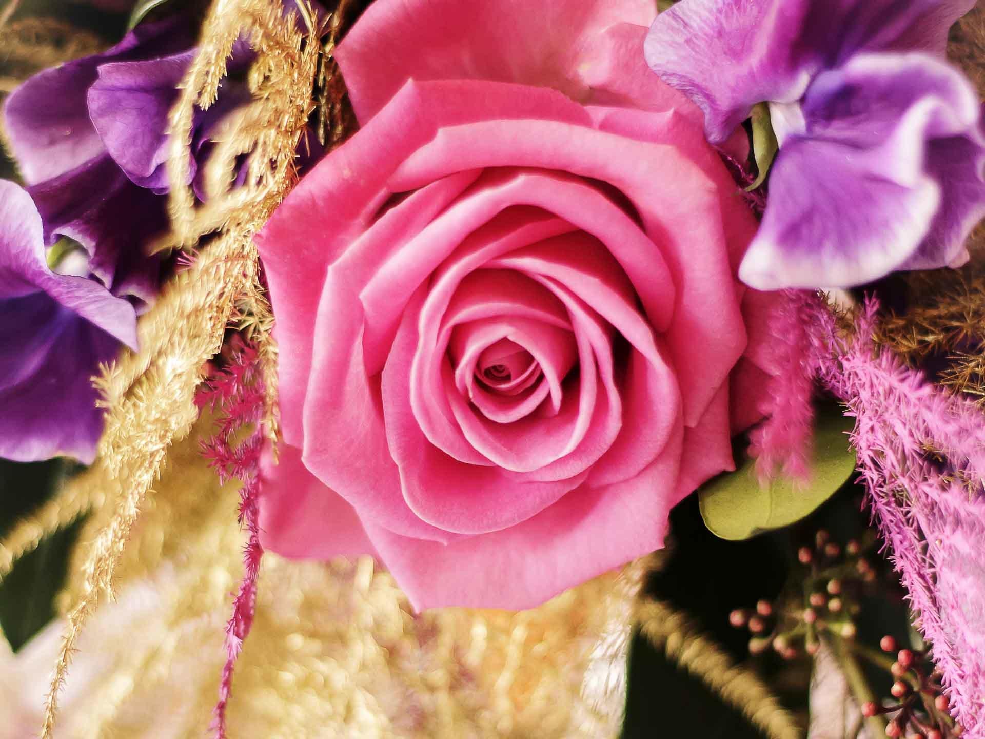 Une rose, l'éternelle !