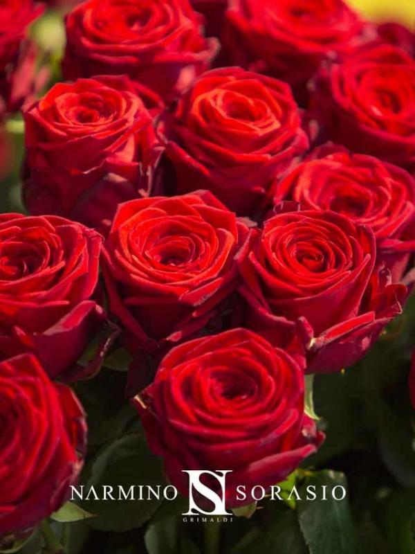 Close up on the satin aspect of these red roses