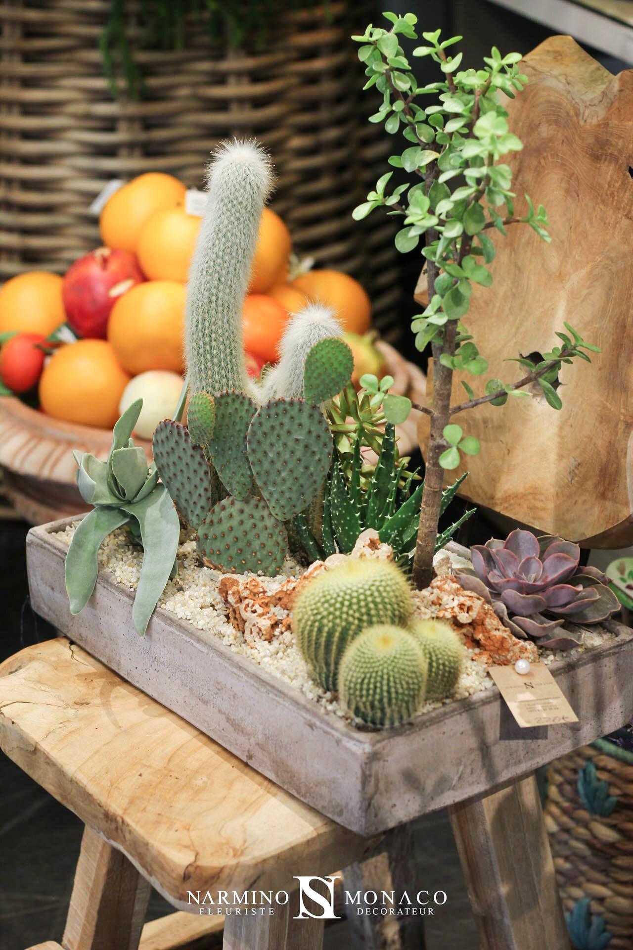Une belle composition à base de cactus et plantes grasses visible à notre boutique Grimaldi à Monaco