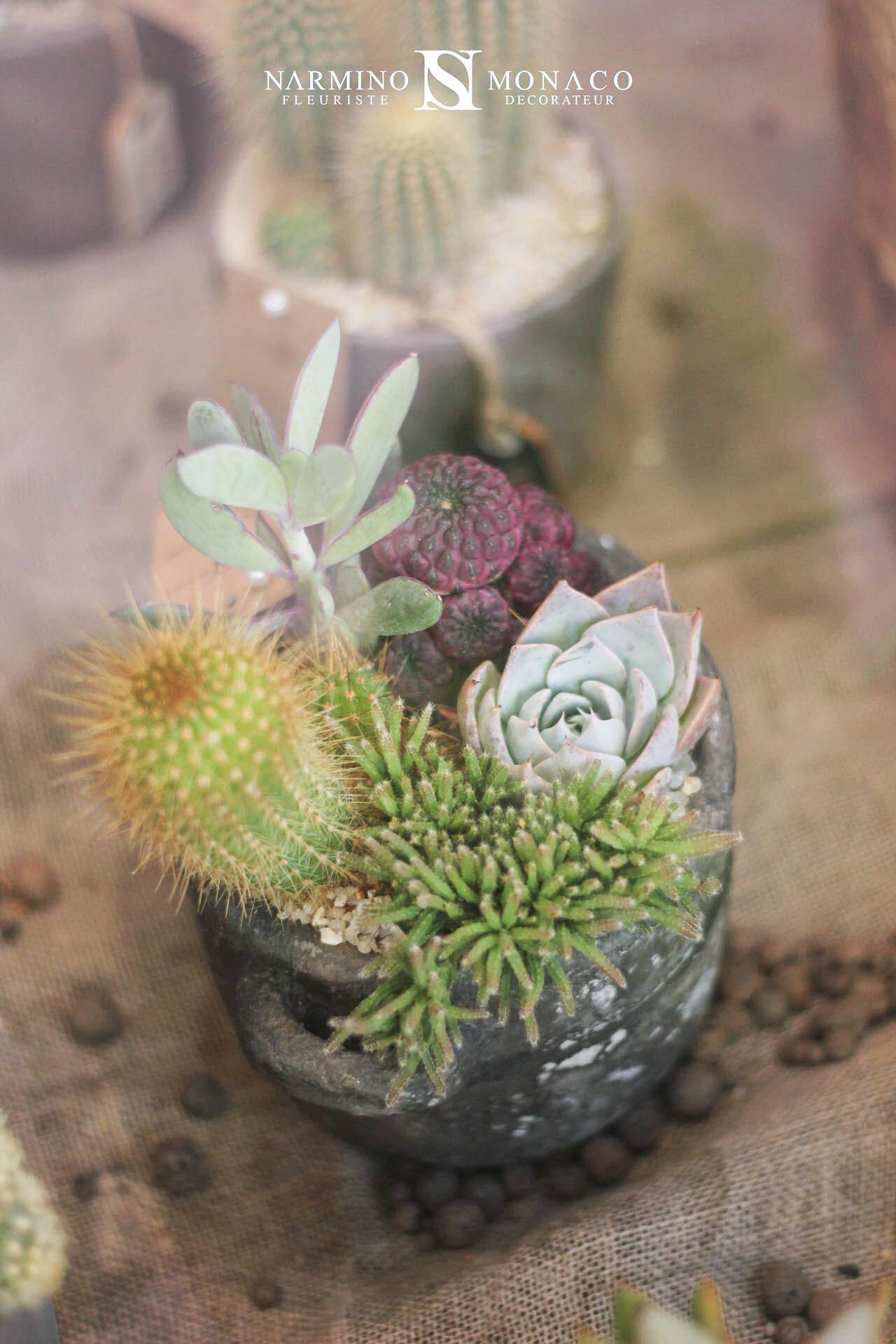 Cactus et plantes grasses Narmino Monaco