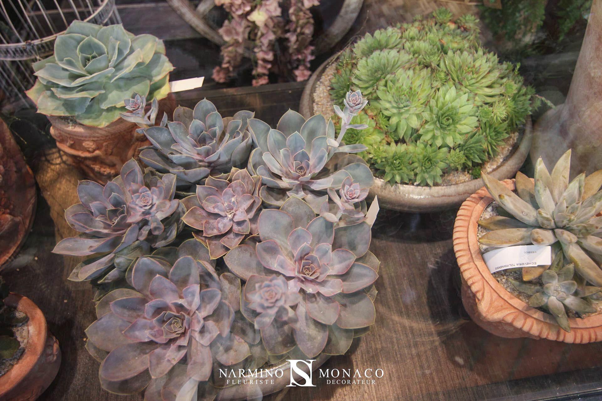 Cactus et plantes grasses dans notre vitrine